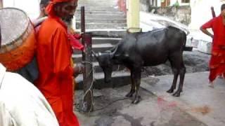 Kamakhya temple - Gawhati -Buffalo sacrifice