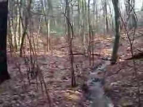 Powder Mill Road Intermittent Stream 04.12.08 (no text)