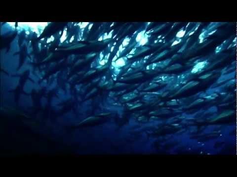 Oceana: How Saving the Oceans Can Feed the World