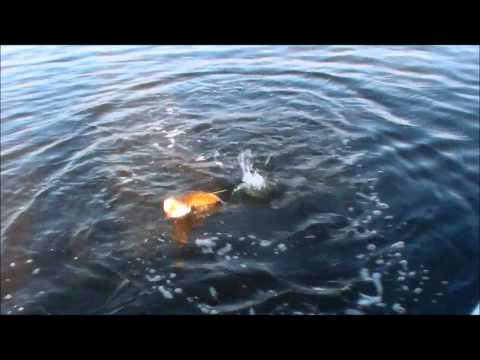 Just Fish Video.wmv