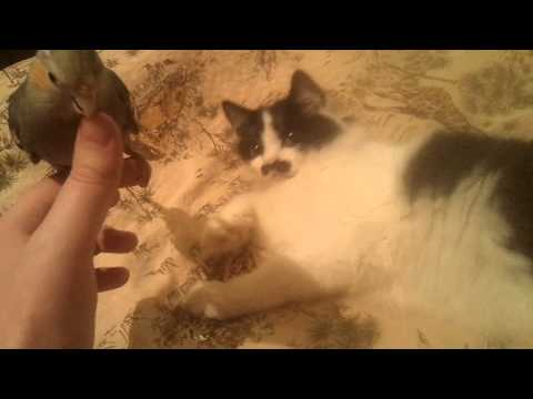 Попугай Петруша и кошка Соня