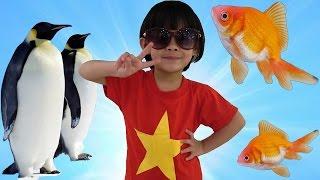 AnAn Đi Chơi Thủy Cung Xem Chim Cánh Cụt Và Xem Cá ❤ AnAn ToysReview TV ❤