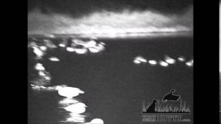 Essai des jumelles à vision nocturne Bushnell Equinox Z 4x50
