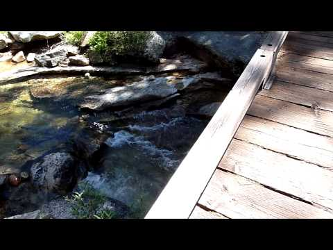 Panaromic view at the Snow Creek footbridge 110818 Video