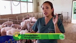 Cría de cerdos en cuatro bandas | La Finca de Hoy