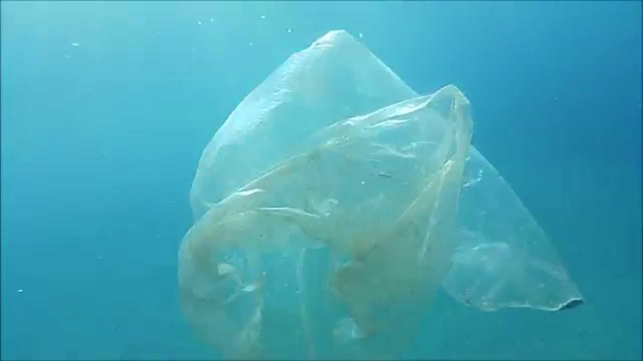 Japan hit by invasion of giant Nomuras jellyfish  Telegraph