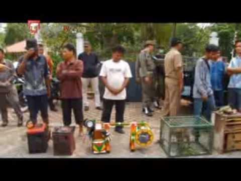 Indonesia bans masked monkeys performances