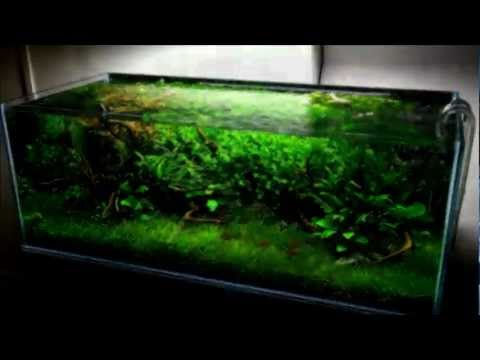 300L Nature Aquarium