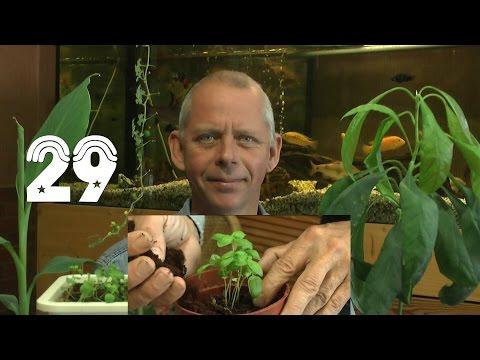 Die Sämlinge Und Wie Geht Es Weiter Mit Den Exoten Und Anderen Pflanzen Teil 29