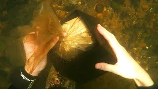 Top 10 Most Bizarre Things Found While Diving