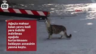 Ağaçta mahsur kalan yavru kedi iner inmez annesine koştu