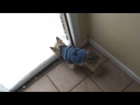 初めて雪を見た犬の反応w