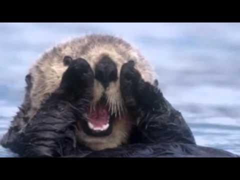 sea otter rescue news report