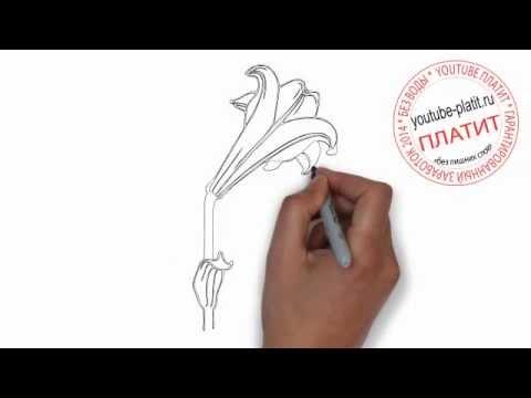 Видео как нарисовать ландыши карандашом поэтапно