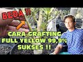 How to grafting full yellow Adenium - Different !! MP3