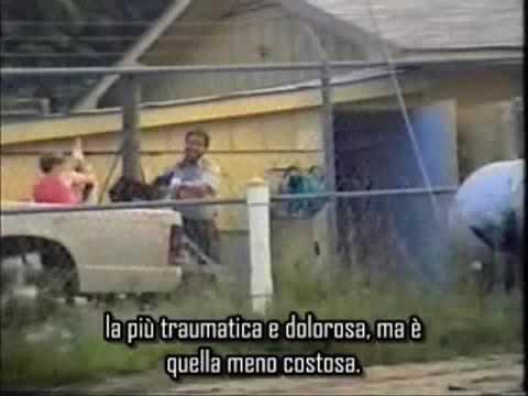 """PRENDIAMO COSCIENZA!!! – """"EARTHLINGS"""" – sottotitoli in italiano – parte 2/11 (GLI ANIMALI).mp4"""