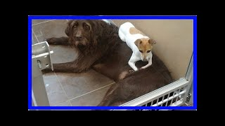   Dog Rescue StoriesHomeless Dogs Adopted Together Because They Wouldn't Stop Cuddling