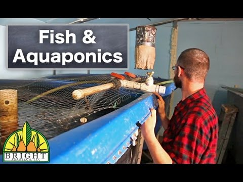 Fish And Aquaponics