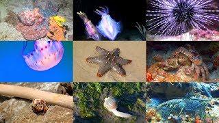 Zeedieren in het Engels voor kinderen (met video's)