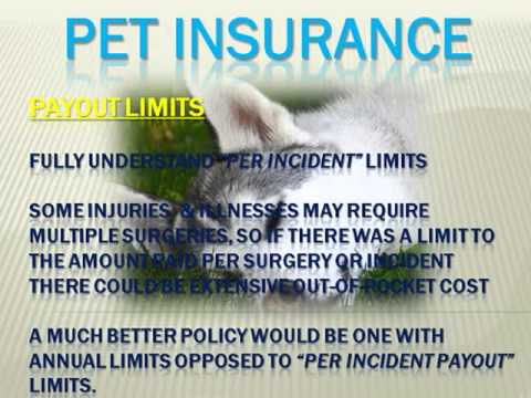 Do Auto Insurance Quotes Affect Your Credit Score Free