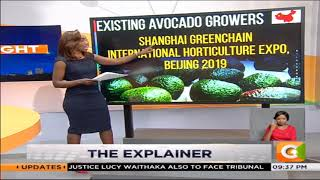 | THE EXPLAINER | Avocado Exports to China
