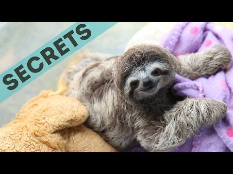 14 Secrets Sloths Don't Want You To Know