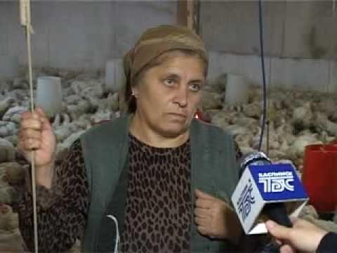 ТБС-Каспийск Разведение домашней птицы