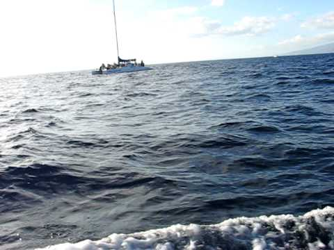dolphin-jumping-out-of-the-water-in-hawaii.html