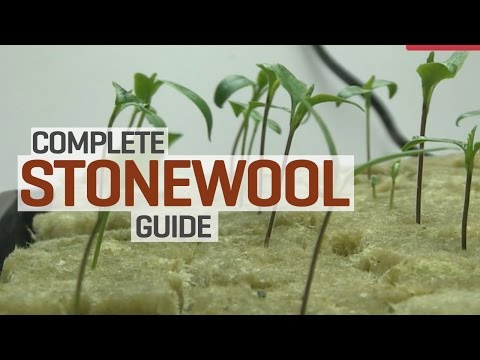 Rockwool Hydroponics Propagation and Transplanting Complete Guide