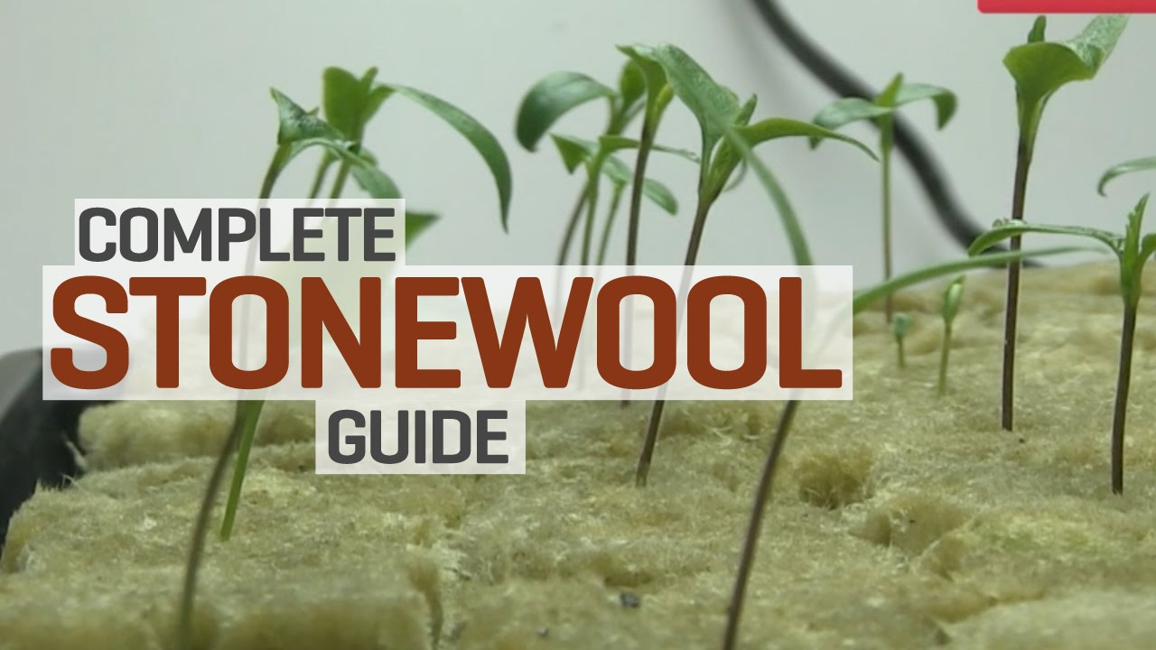 Rockwool Hydroponics Propagation and Transplanting Complete Guide  YouTube