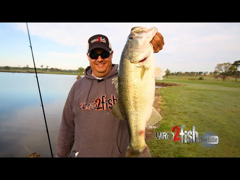 Keep Bank Fishing Simple for More BIG BASS like these!