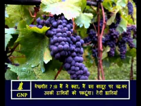 Songs -7 Hindi Picture Bible