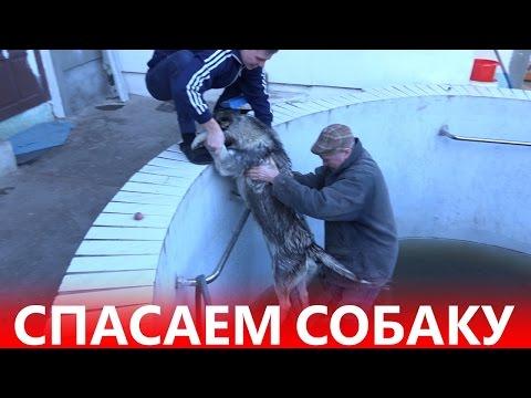ШОК!!! Спасаем СОБАКУ - Хьюго упал в бассейн - ХАСКИ В БАССЕЙНЕ
