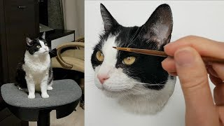 Master class: How To Draw A Cat