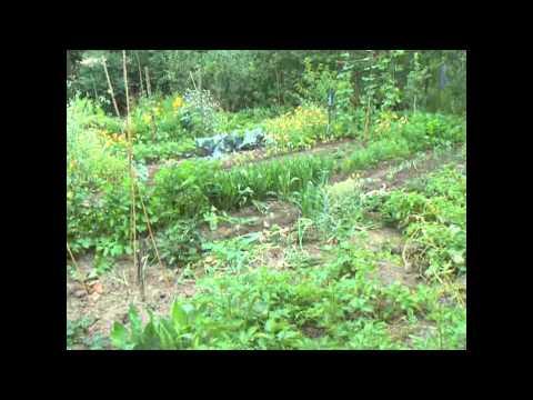 Nr. 29.)  Selbstversorgergarten Juli, Was Ist Zu Pflanzen?