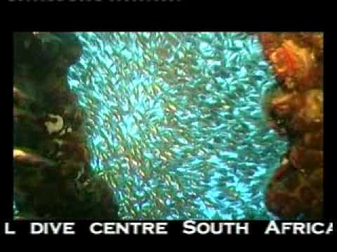 Scuba Diving South Africa - Reef Diving at Aliwal Shoal