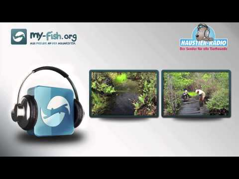 My-fish.org - Interview Mit Christian Steinberg: Huminstoffe, ökologischer Abfall Aber Lebenswichtig