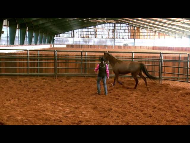 Does your horse have bucking problems? thumbnail