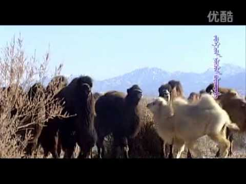 Deed Mongol Ardiin Duu-temeechinii Hair video