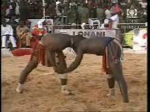 Niger Traditional Wrestling: Kokowa tsakanin Dan Tambai Tahoua da Yakouba Adamou Niamey thumbnail