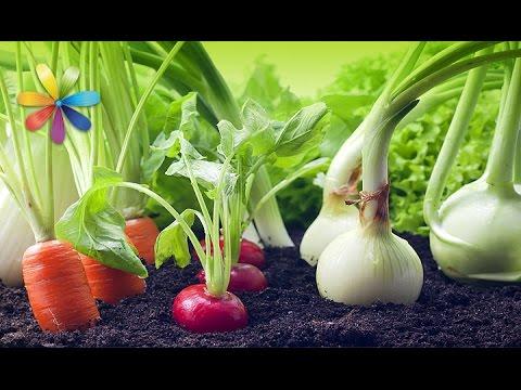 Как выращивать овощи дома, чтобы целую зиму был урожай – Все буде добре. Выпуск 900 от 20.10.16