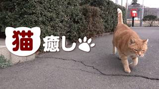 猫癒し(かわいい猫たちに癒されます)
