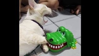 Awesome Funny Animals Compilation, Funniest Cat And Dog Videos, Try Not To Laugh!