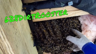 Hive Removal Under Elevated Home - Ansley Mississippi