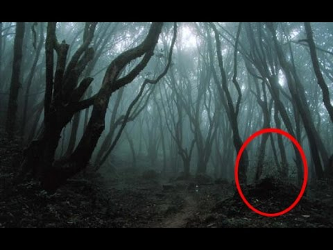 EXPLORING HAUNTED FOREST AT NIGHT!! (EXTREME WARNING)
