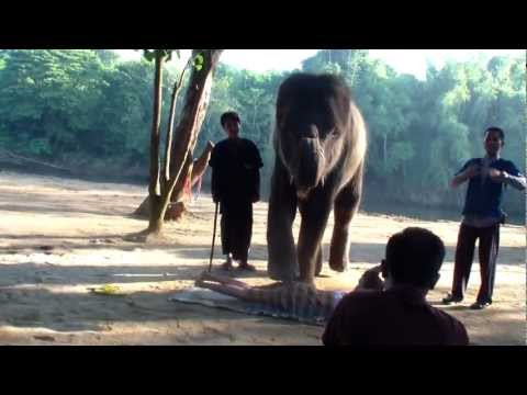 Тайланд-Шоу слонов на реке Квай.MP4