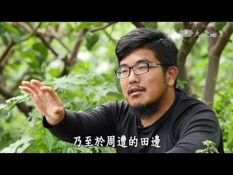 台綜-農夫與他的田-20170120 那些草教我的事