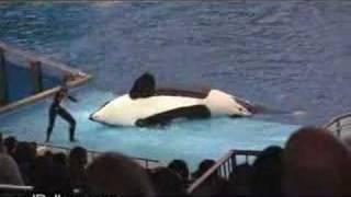 El Rellano - Caida De La Orca