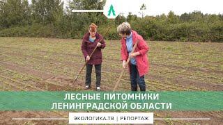 Лесные питомники Ленинградской области