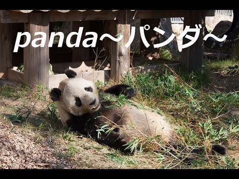 panda~パンダ~